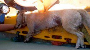 El perro murió sofocado tras estar varias horas encerrado en el auto
