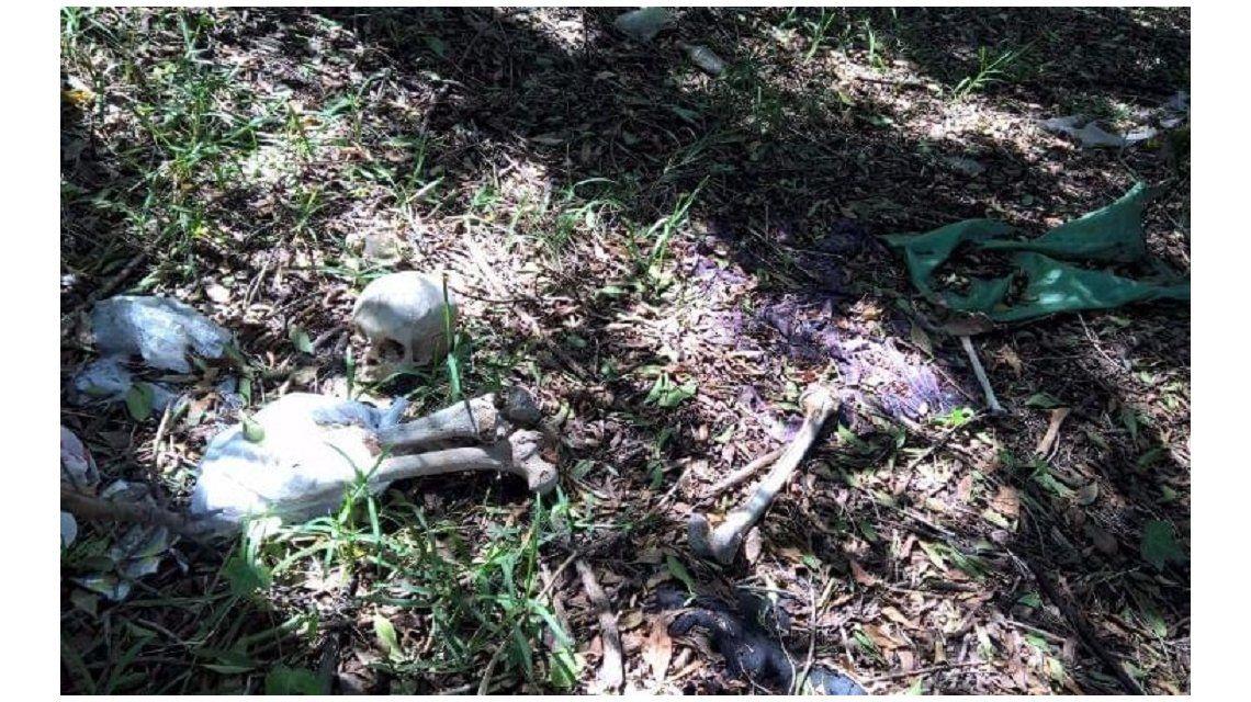 Una familia halló los huesos