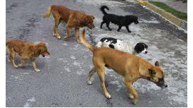 Bajarán los impuestos a cambio de adoptar un perro