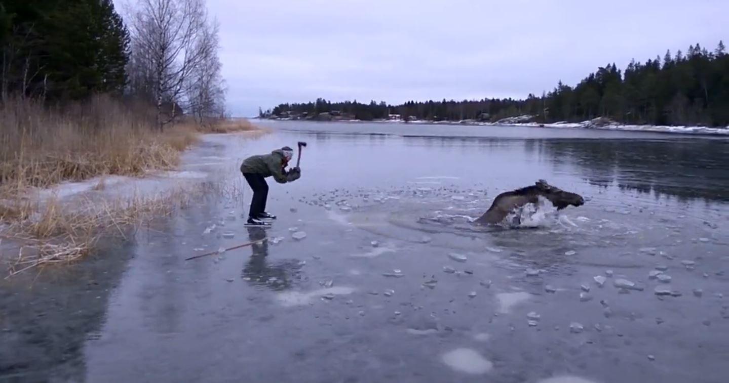 Rompieron el hielo de un lago congelado para salvar a un alce