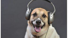 Según un estudio, a los perros les gusta el rock y el reggae