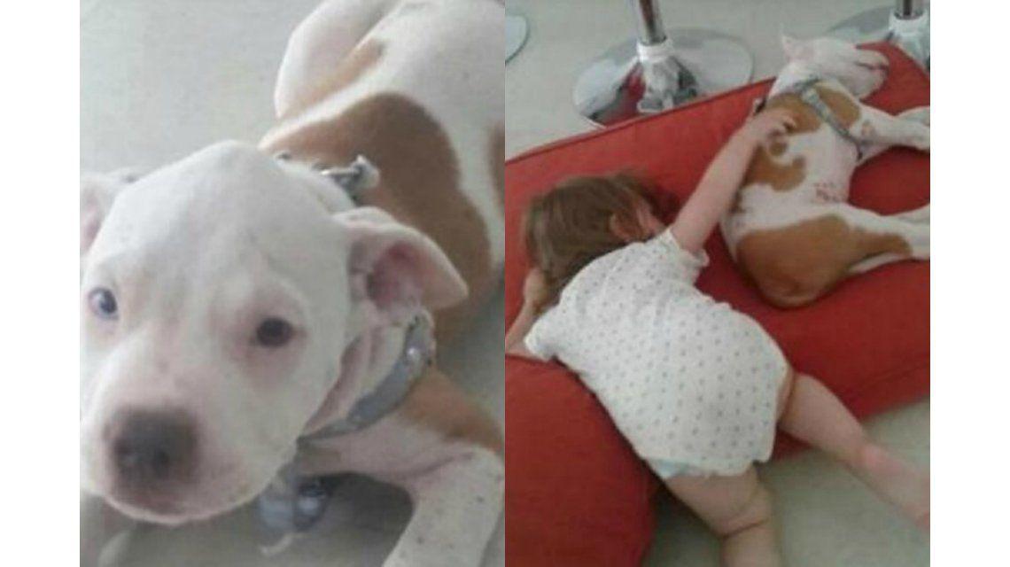 Les robaron el perro que Papa Noel les había traído