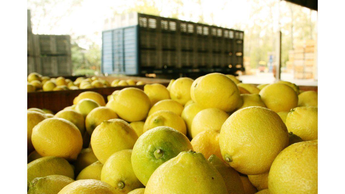 Los productores calificaron de absurda la suspensión de las importaciones de limón