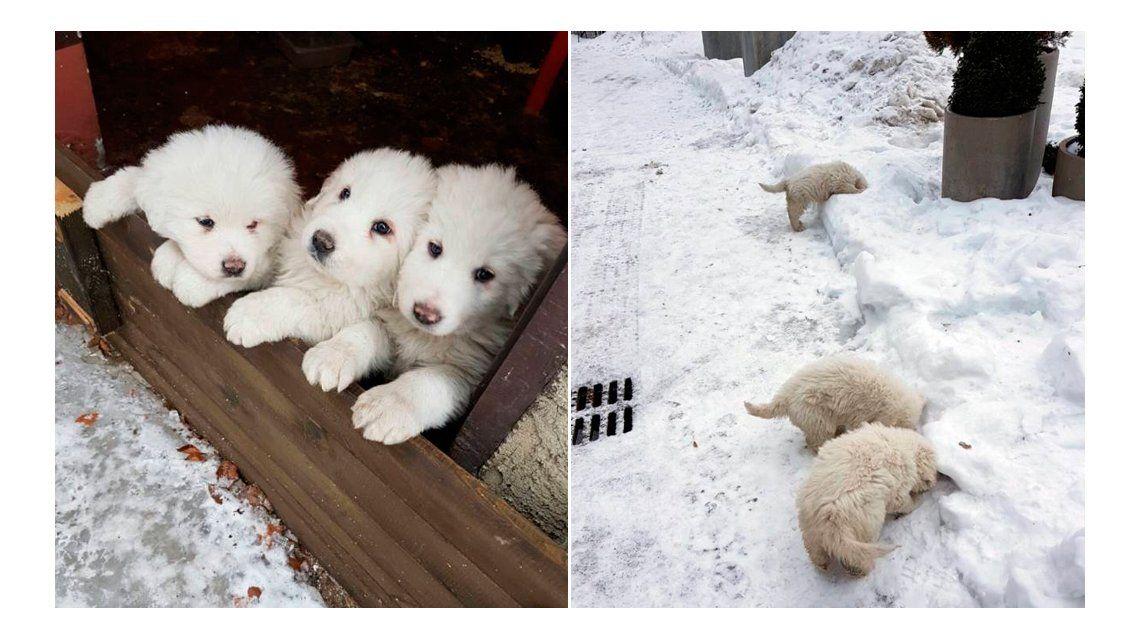 Los perritos sobrevivieron a la avalancha