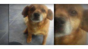 Degollaron a un perro en Córdoba