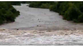 Decenas de vacas son arrastradas por el agua de un arroyo