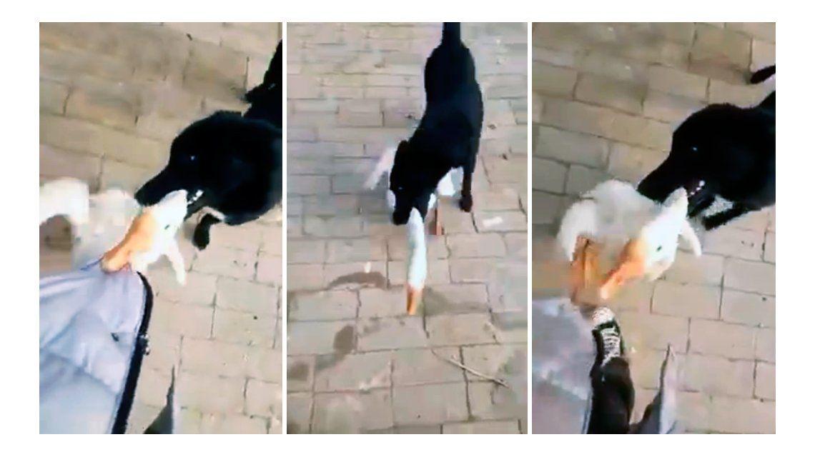 Un perro defendió a su dueño del ataque de un ganso
