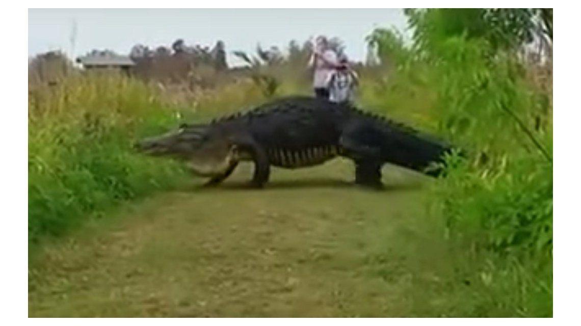 Un cocodrillo soprendió a turistas en un parque de Estados Unidos