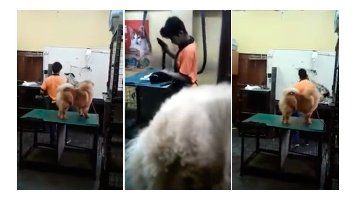 Ocurrió en una veterinaria de Encarnación
