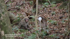El extraño caso del mono que tuvo sexo con una cierva