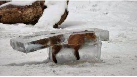 Encuentran a un zorro congelado en el Danubio