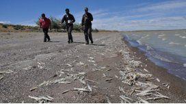 Miles de peces muertos sobre la arena