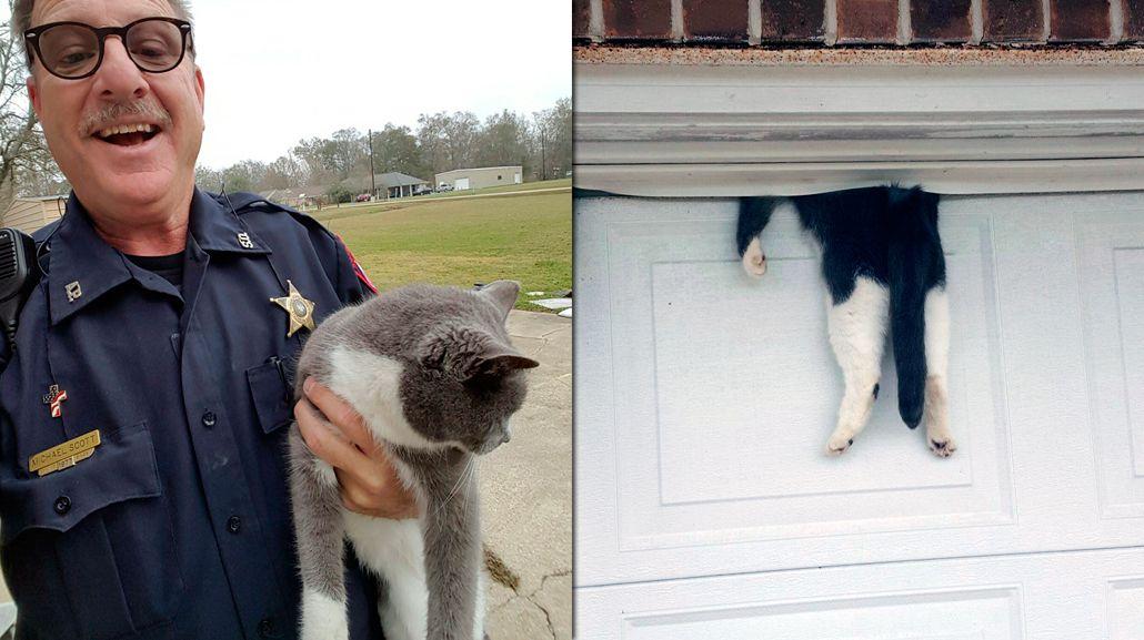 Una gata casi muere partida al medio por un portón automático