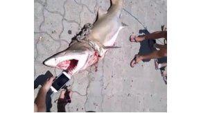 Un tiburón en Mar del Plata