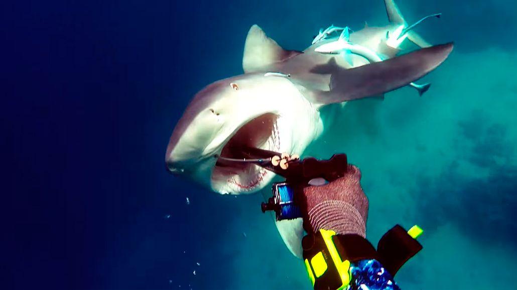 Un pescador fue atacado por un tiburón en Australia