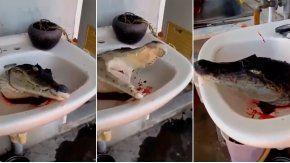Un cocodrilo fue decapitado en Tailandia