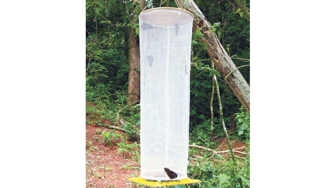 Un hombre fue detenido mientras cazaba mariposas en Misiones