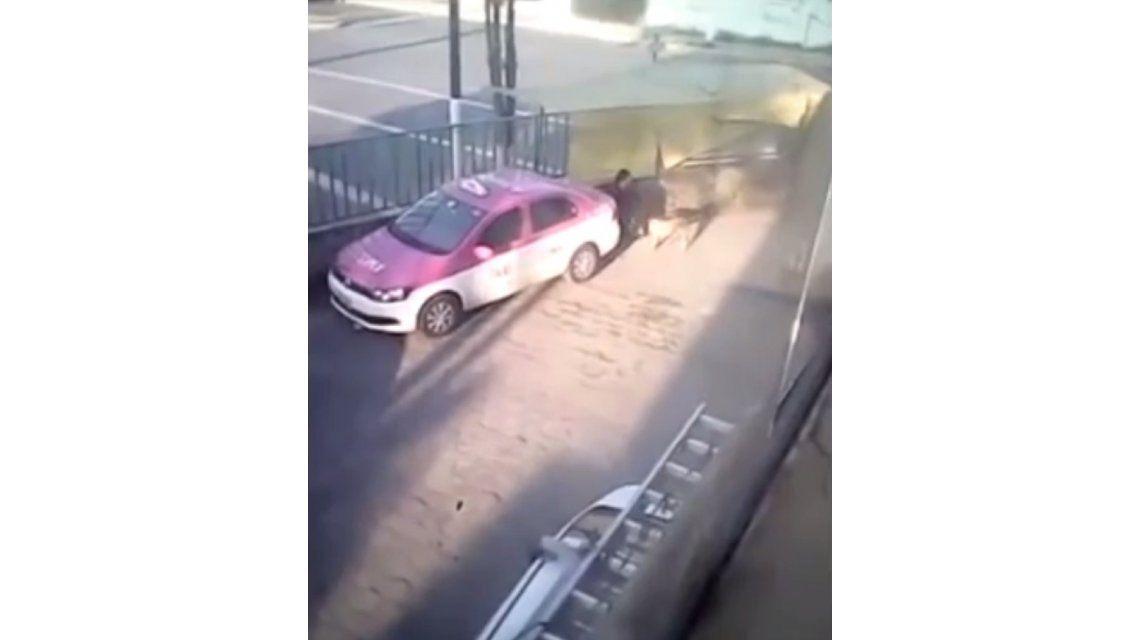 Videos de zoofilia hombres con perras