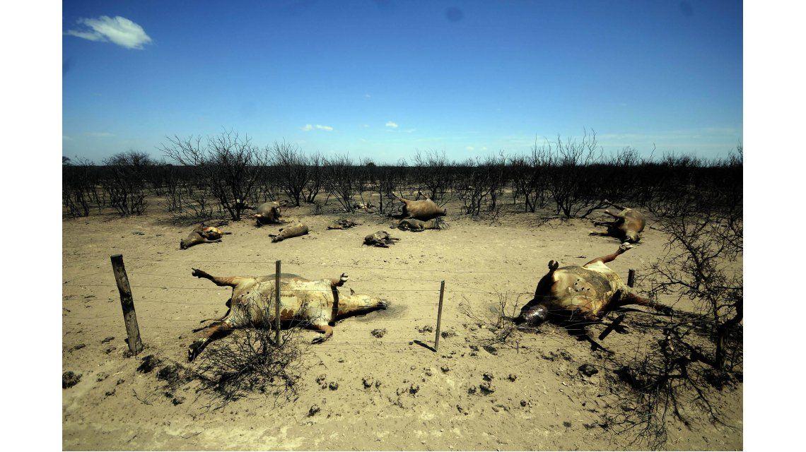 Unas 800 mil hectáreas resultaron afectadas en La Pampa