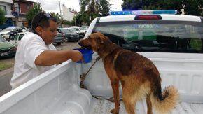 Detuvieron a dos hombres por maltrato animal en Rosario