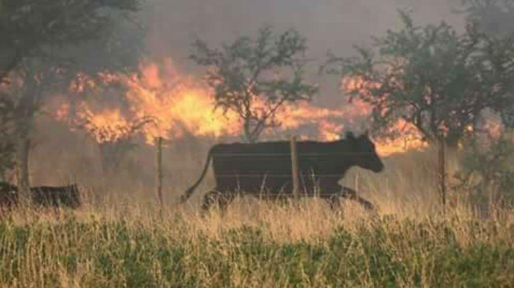 Así es el incendio en La Pampa