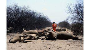 Unas 800 mil hectáreas resultaron afectadas en La Pampa por los incendios rurales.