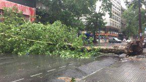 Destrozos en las calles de Montevideo
