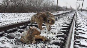 Ocurrió cerca de la estación ferroviaria de Úzhgorod