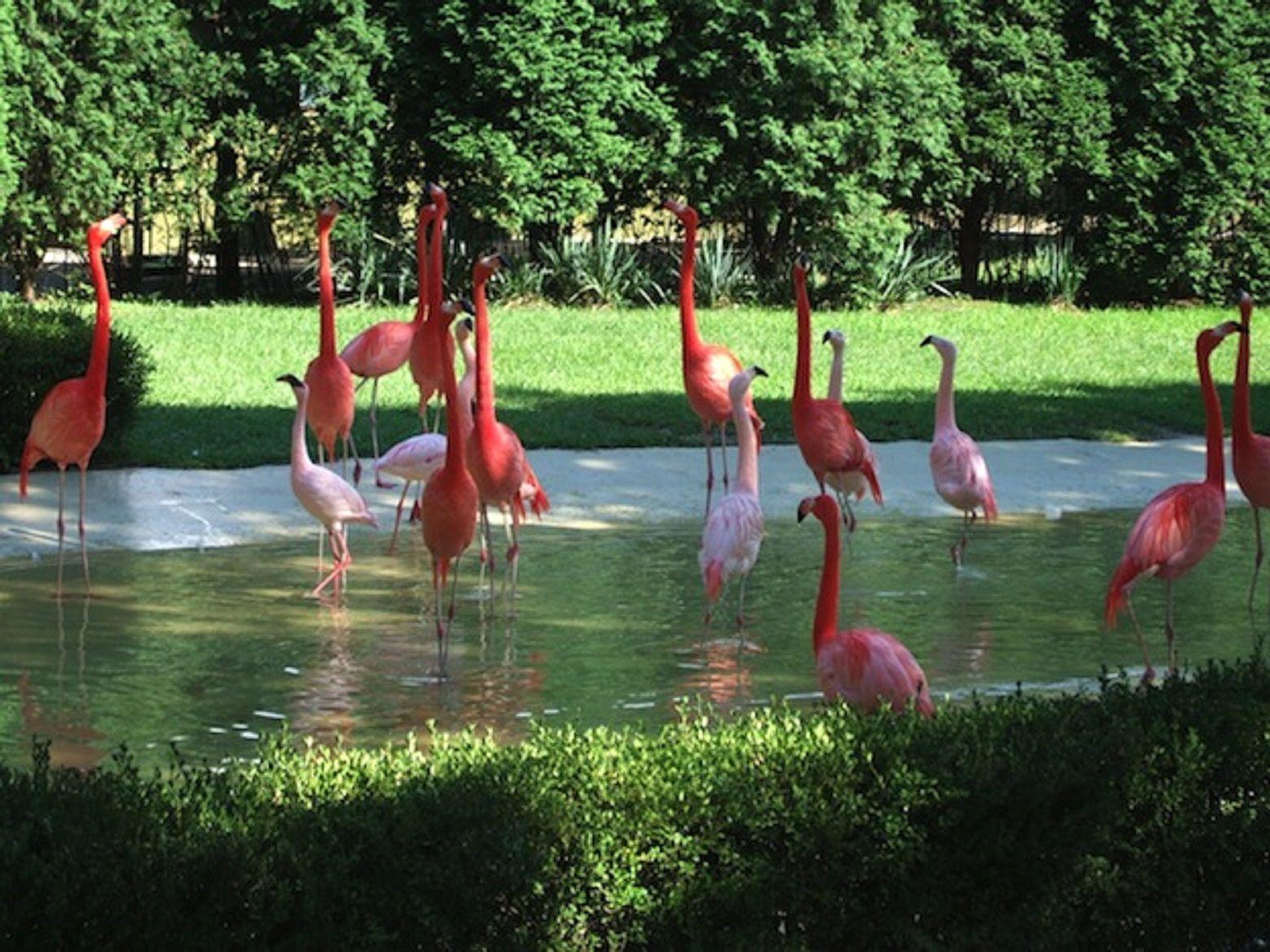 Le cortan las alas a los flamencos de Córdoba
