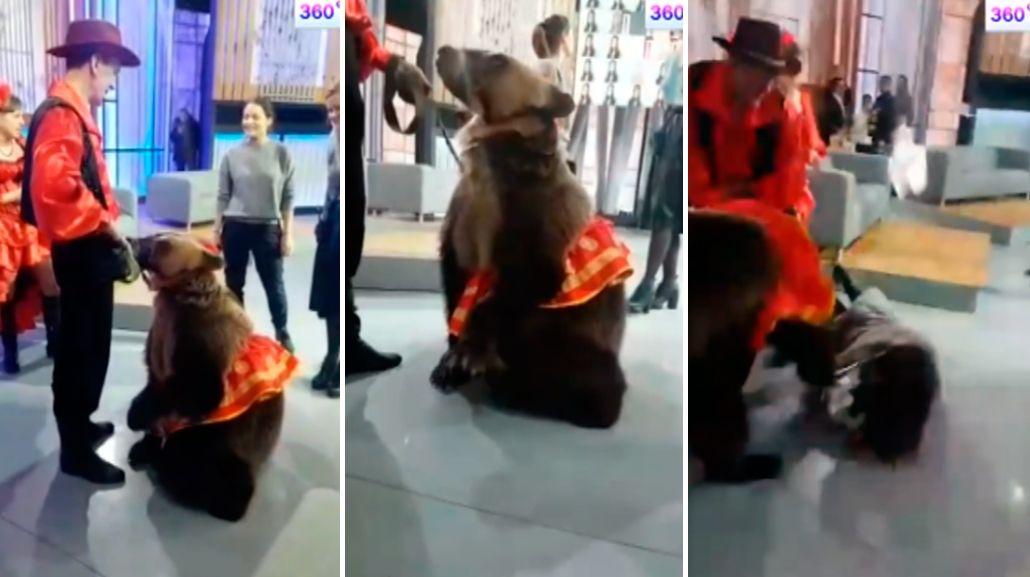 Un oso atacó a una mujer durante un programa de televisión