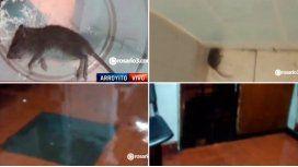Un hospital está lleno de ratas y agua en Rosario