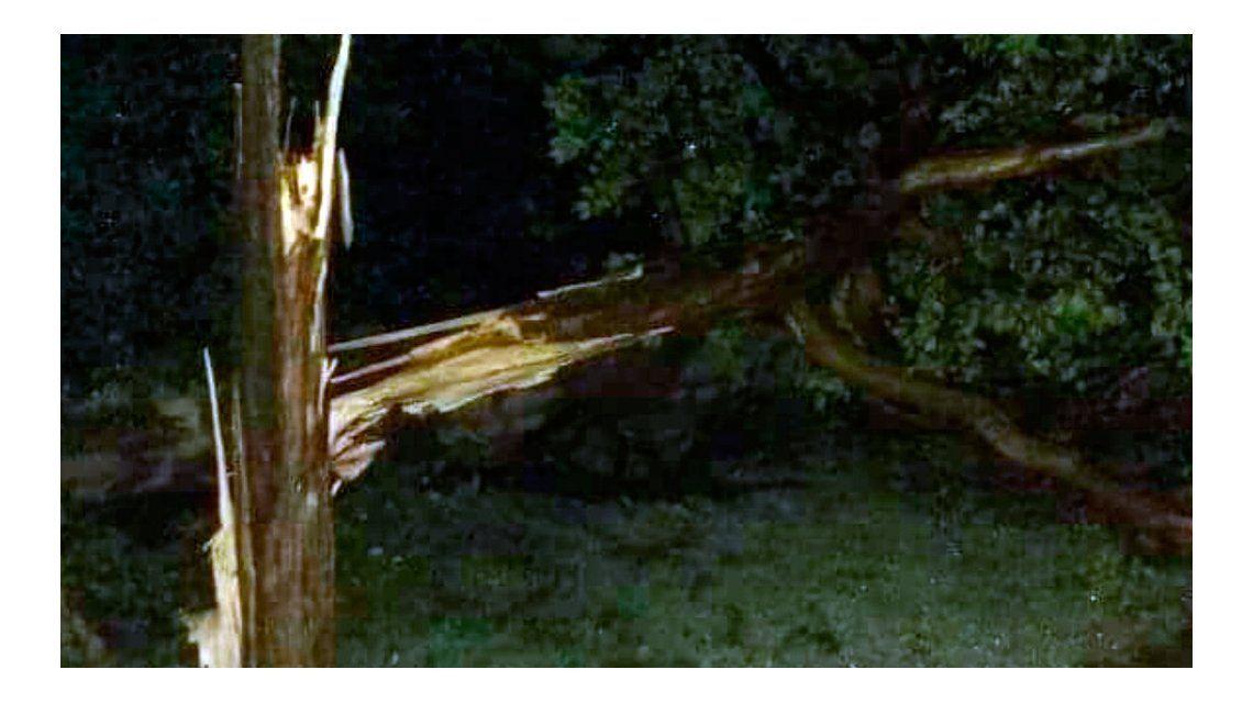 Un centenar del árboles quedaron caídos