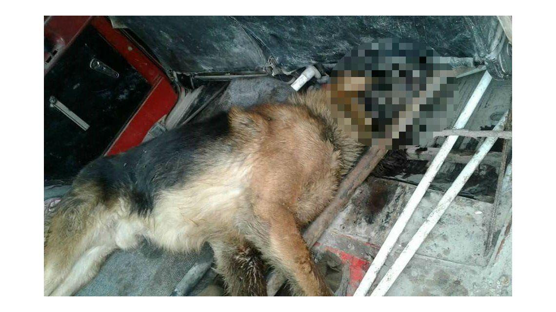El perro al que dejaron morir yaciendo junto al comercio
