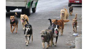 Proponen multar a quienes alimenten a perros callejeros