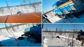 Con un camión, atropellaron y mataron a un oso