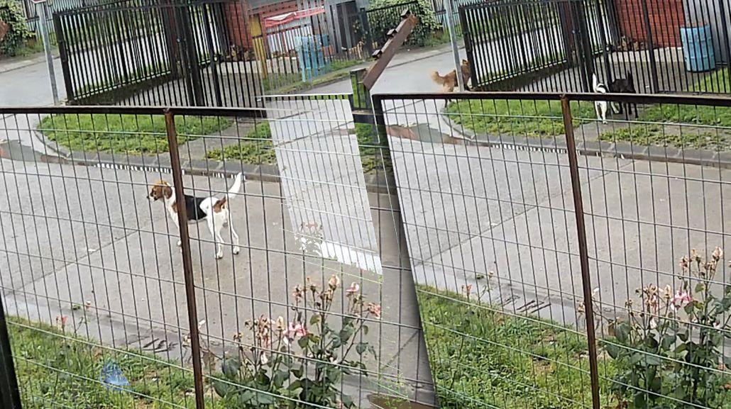 VIDEO: La reacción de un grupo de perros ante el sismo en Chile