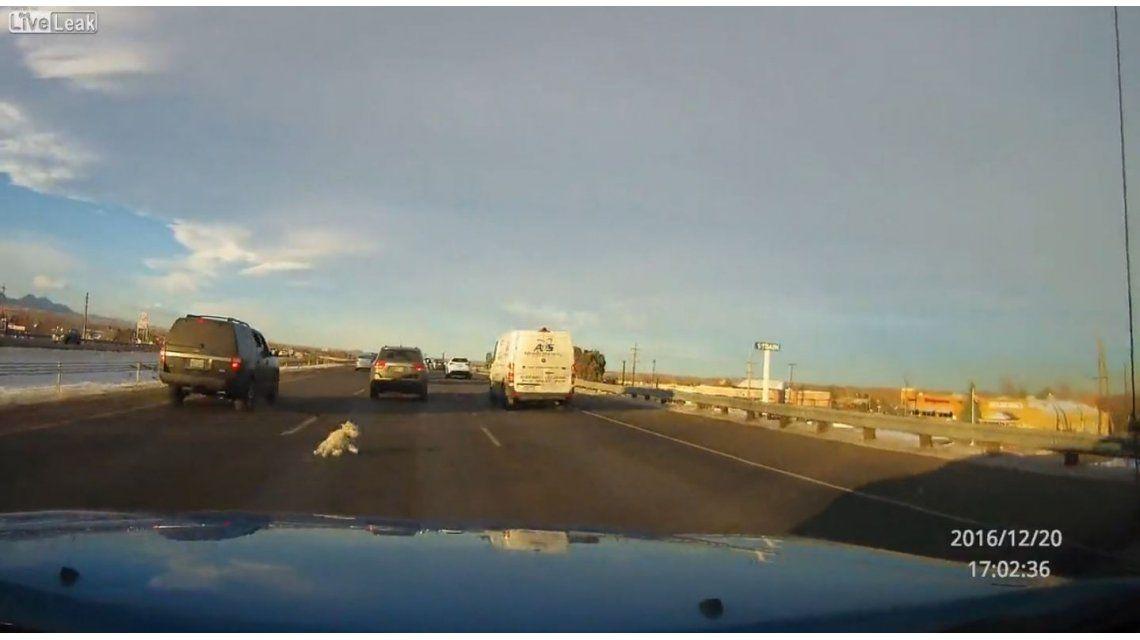 Un perro salta de la camioneta de su dueño en la autopista