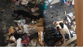 Un perro y un gato sobreviven tras meses de encierro