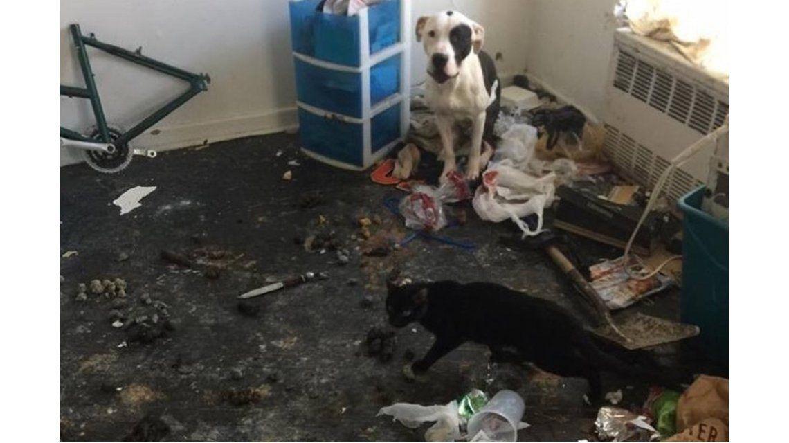 Un perro y un gato logran sobrevivir tras meses de encierro