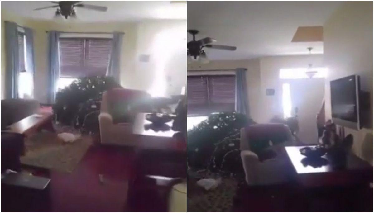 Un joven mató a un ciervo que entró a su casa