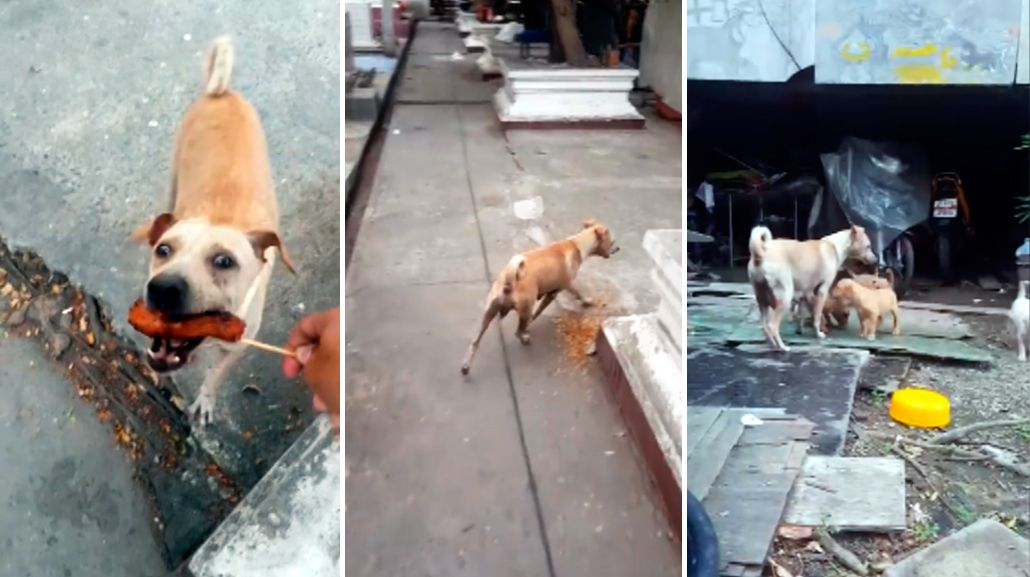El conmovedor video de una perra que pide comida para sus cachorros