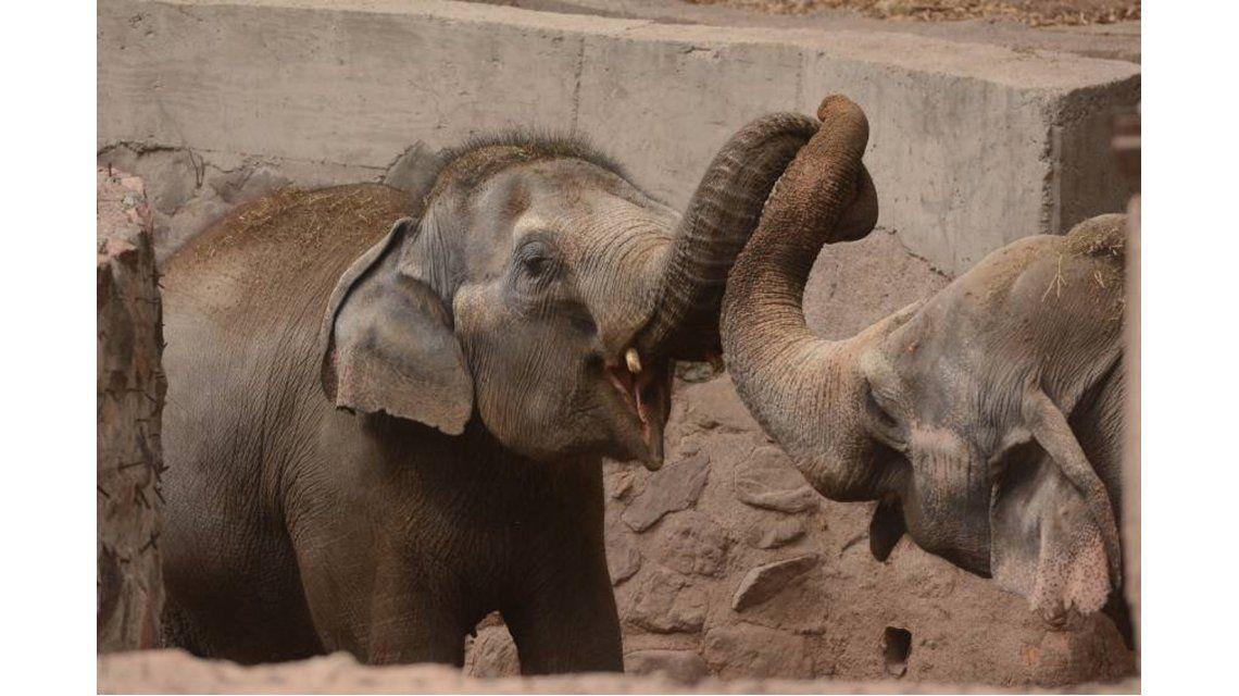 Trasladan elefantes del Zoo de Mendoza