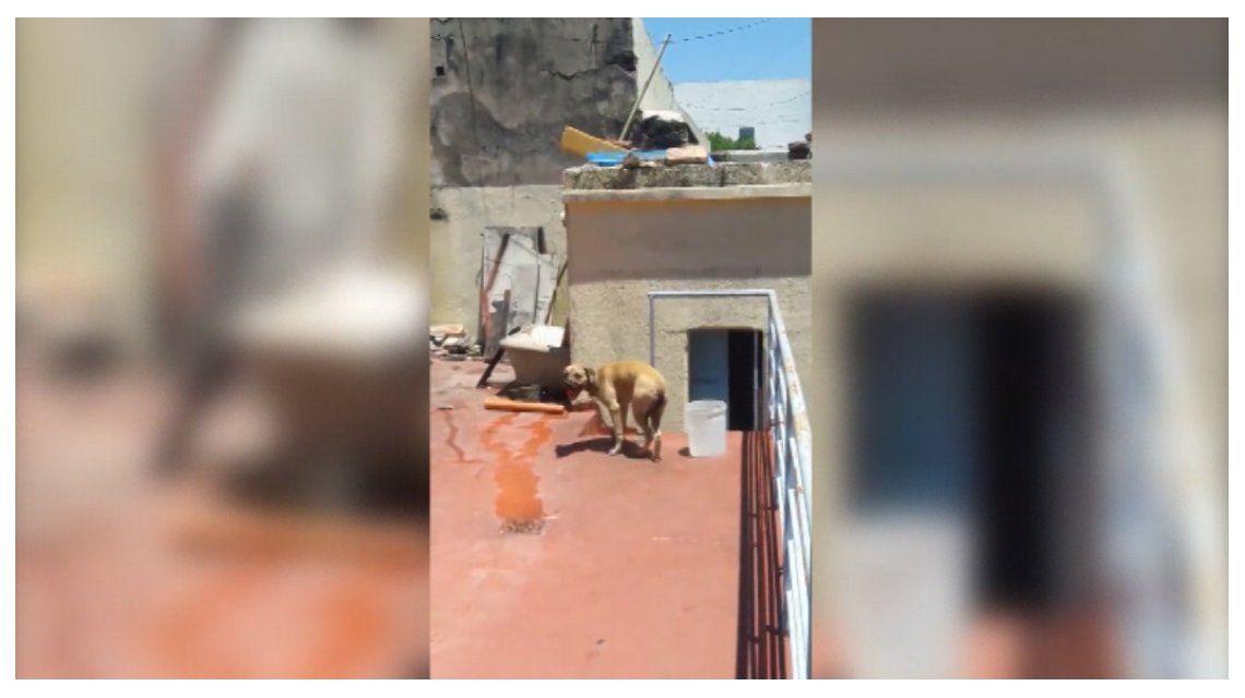 VIDEO: Dejó a su perra atada en una terraza bajo el sol por varias horas