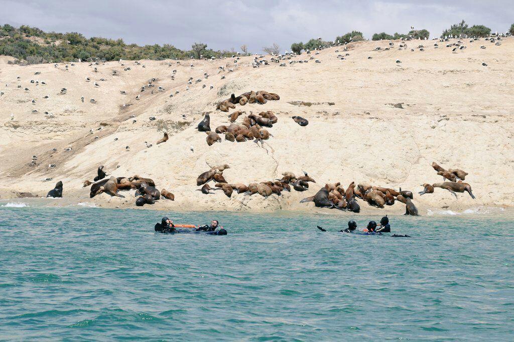 La patagonia veraniega: Puerto Madryn, un destino que crece entre playa y aventura