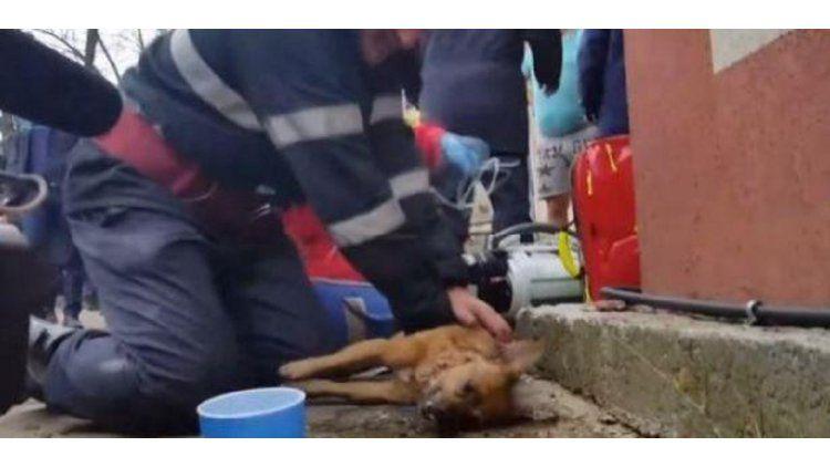Un bombero salvo a un perro haciéndole resucitación