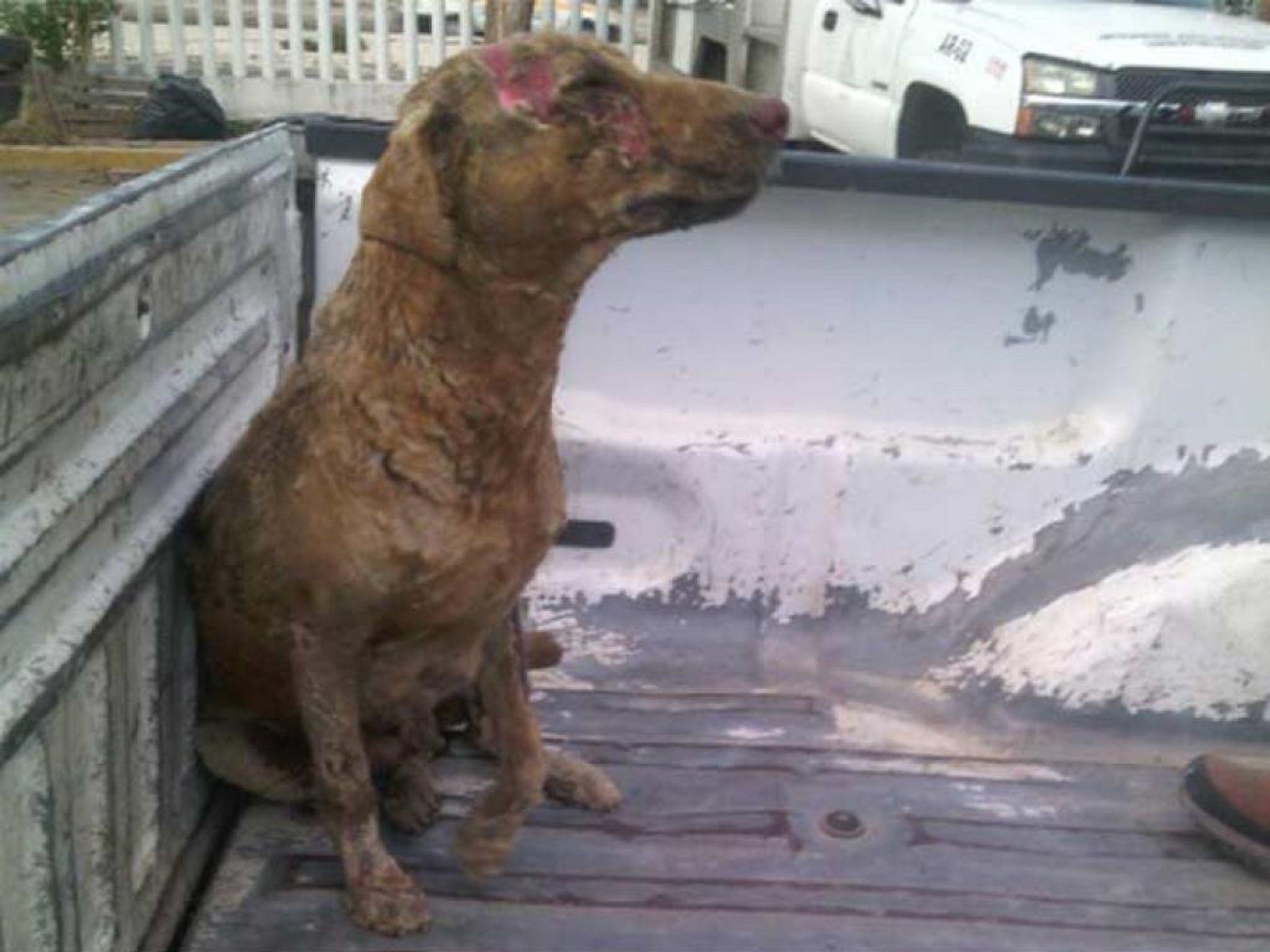 Se quemó tratando de rescatar a sus cachorros