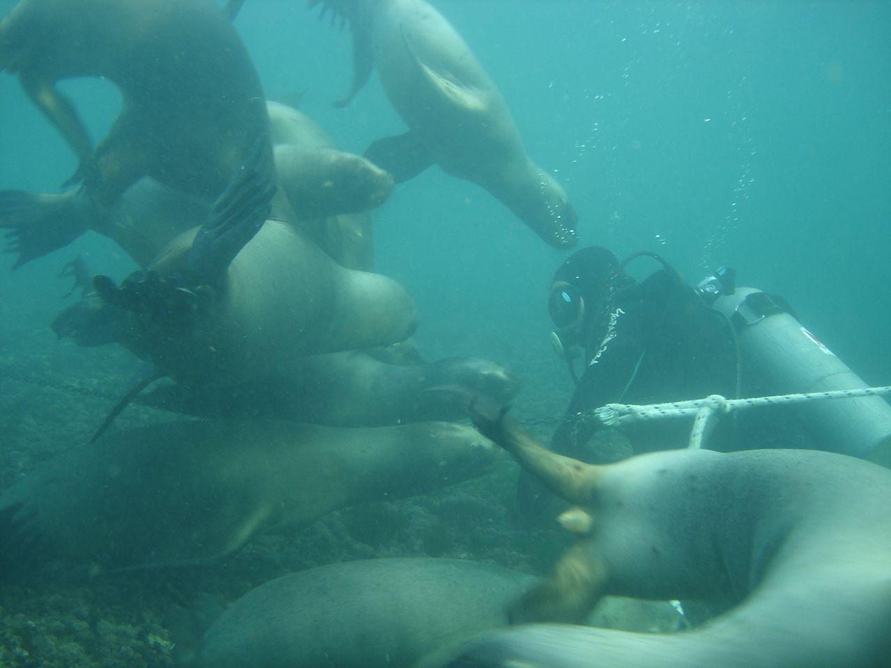 El bautismo submarino es una de las actividades más impresionantes que ofrece la ciudad
