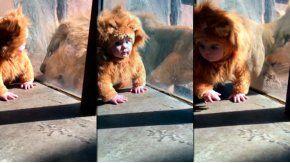 El bebe ni siquiera se asustó al ver al león