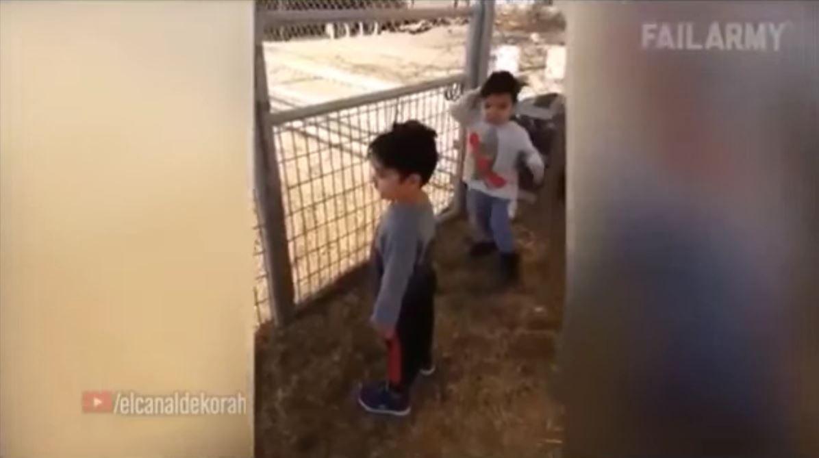 El papá le preguntó qué ruido hacía la cabra y él no entendió