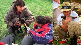 Margarita, la oveja que fue robada en Neuquén.